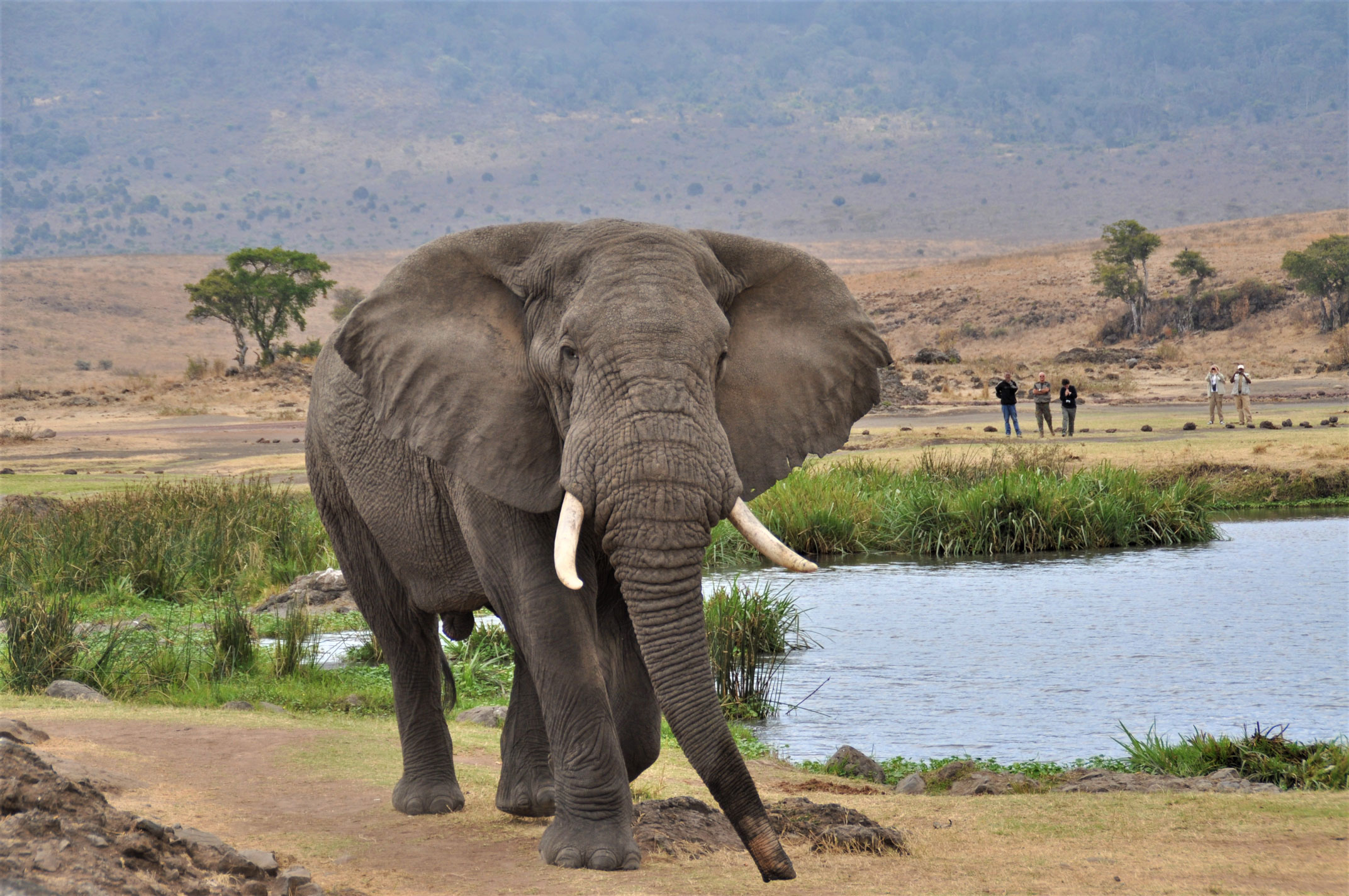 Elephant in Queen Elizabeth National park